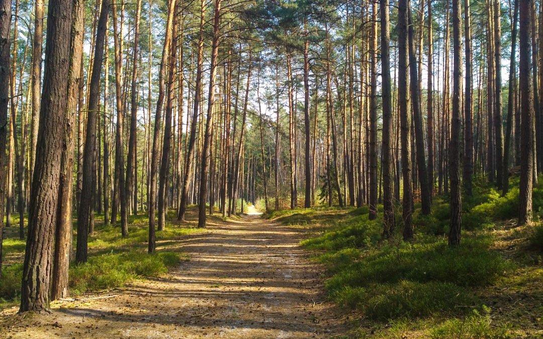 Běhej lesy 2021