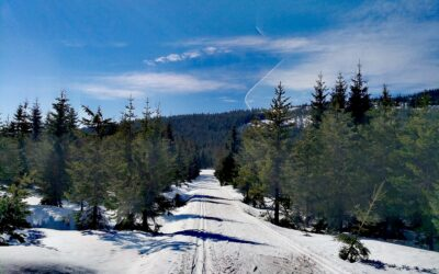 Jak se chovat v zimě na horách